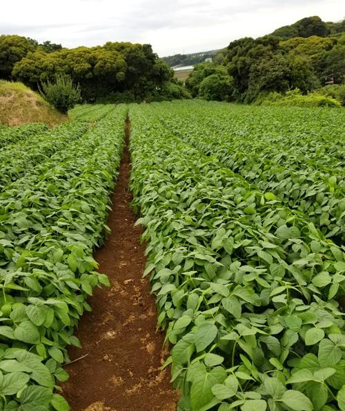 元気の源 枝豆生産畑
