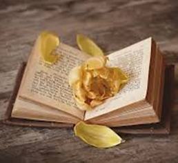 Book open with gold rose petals