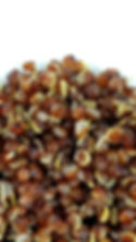Cooked Red Quinoa (Zoomed).jpg