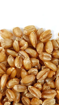Cooked Farro (Zoomed).jpeg