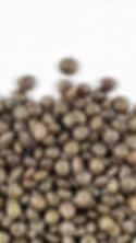 Cooked Black Beluga Lentils (Zoomed).jpg