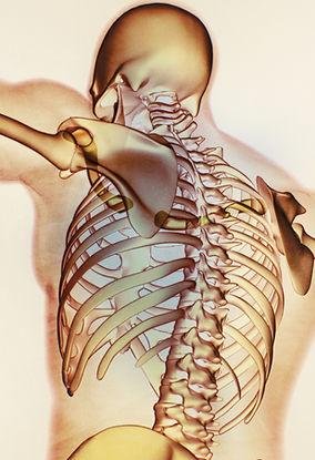 Akasha Cursos anatomía, curso akasha méxico fisiología