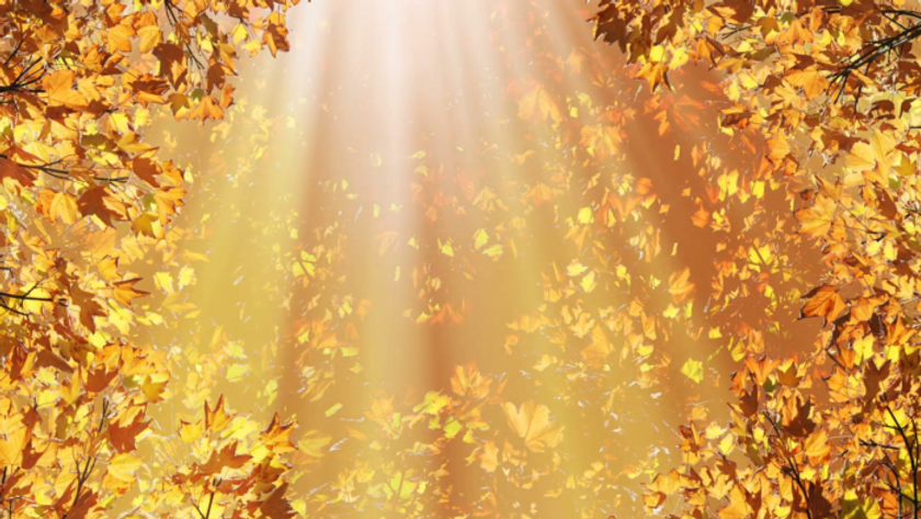 golden-fall-leaves-background_ek2v9ivz__