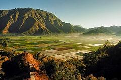 sembalun-rice-fields.jpg