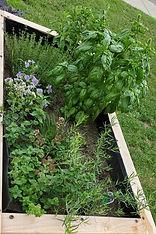 jardin%201n_edited.jpg