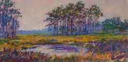 Assateague Wetlands