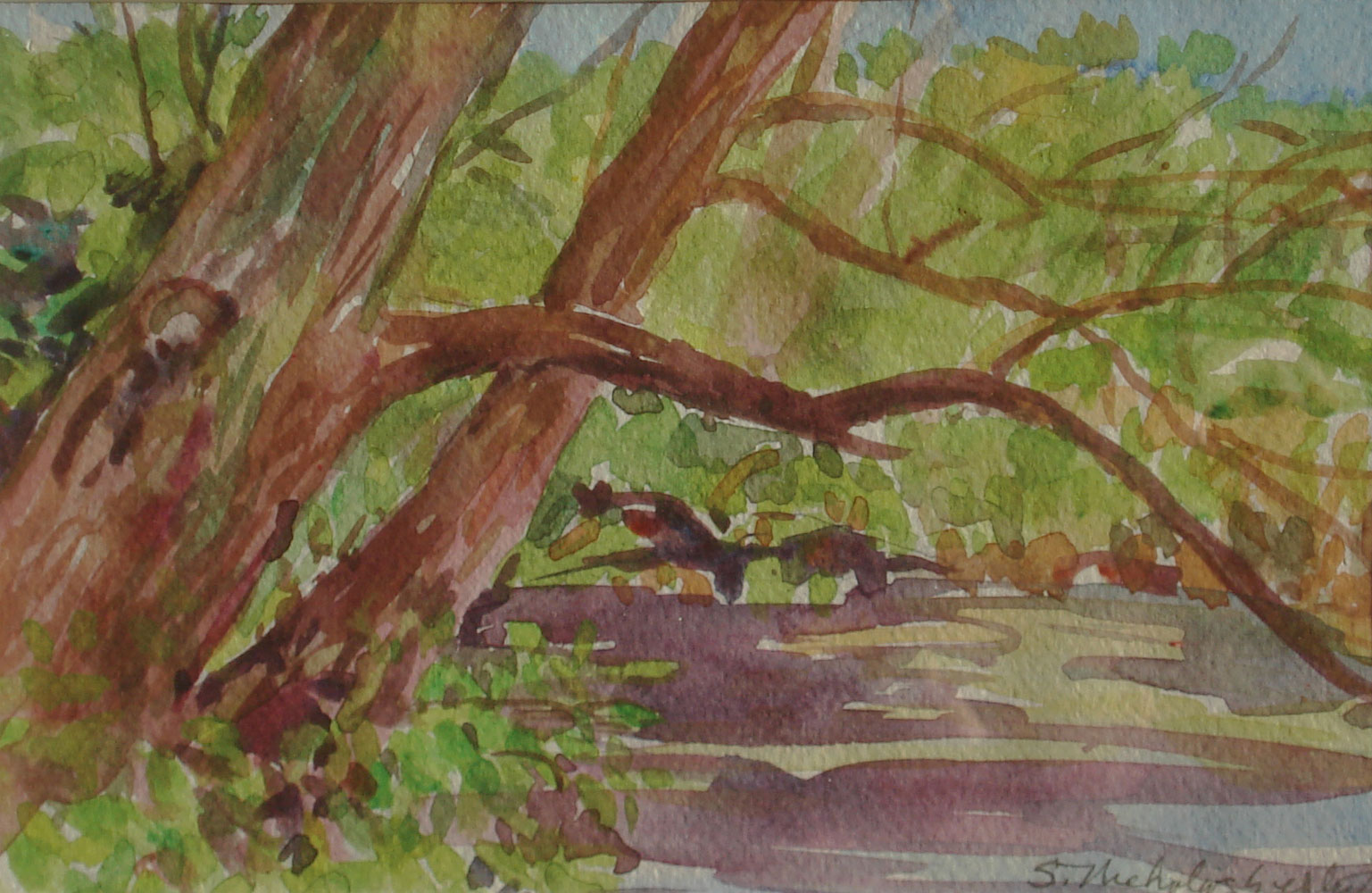 Millbrook Marsh Willow