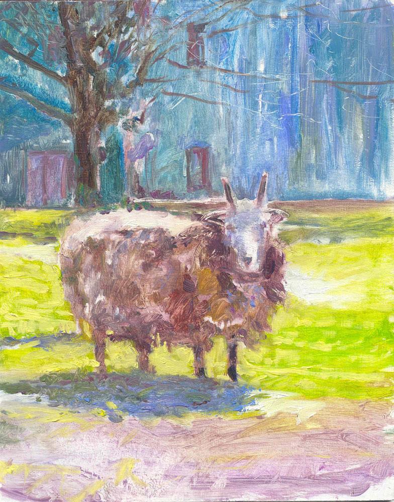 Clara the Sheep