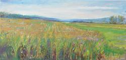 Sunset on Zion Corn Fields