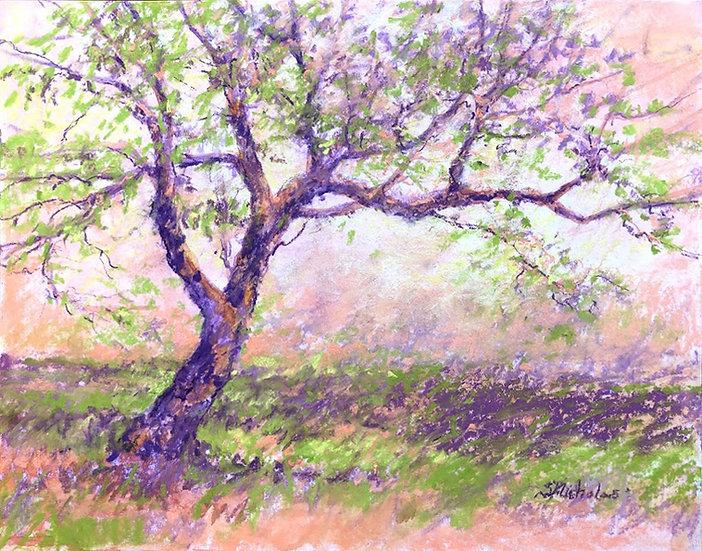 Rhoneymeade Apple Tree