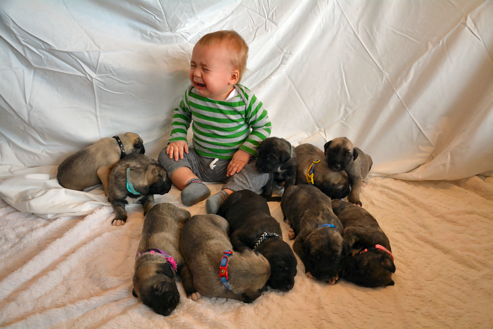 Attack of the puppies!