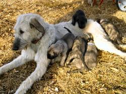 puppies_5wk (2).JPG