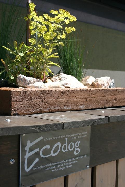 Ecodog 2.jpg