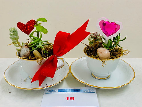 """Tea Cup"" Succulents Fundraiser 3"