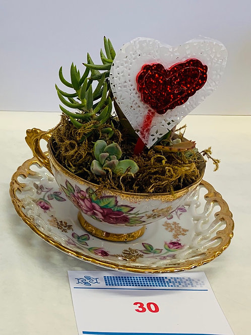 """Tea Cup"" Succulents Fundraiser 2"