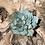 Thumbnail: Stained Glass Succulents