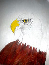 Dedicated to Jackie and Shadow-The bald eagles in Big Bear