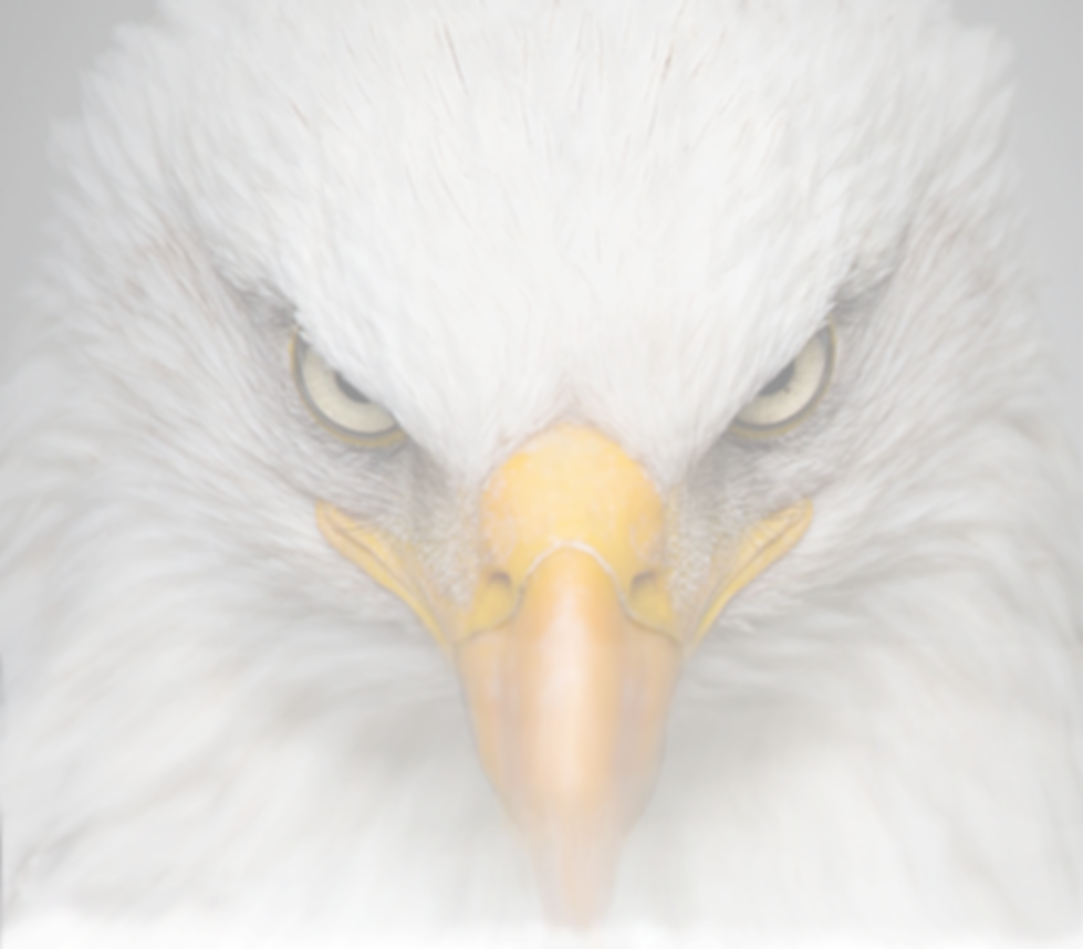 Website-Home-Page-Eagle7.png