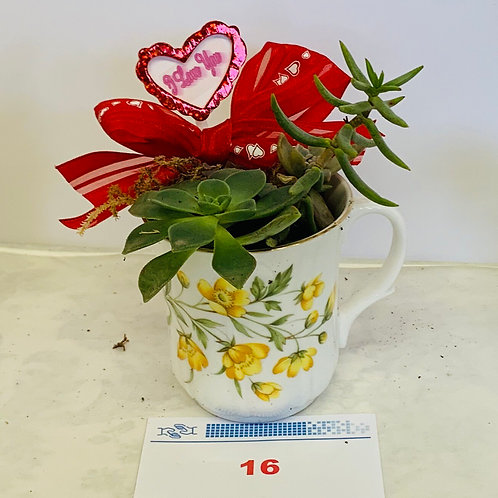 """Tea Cup"" Succulents Fundraiser 1"
