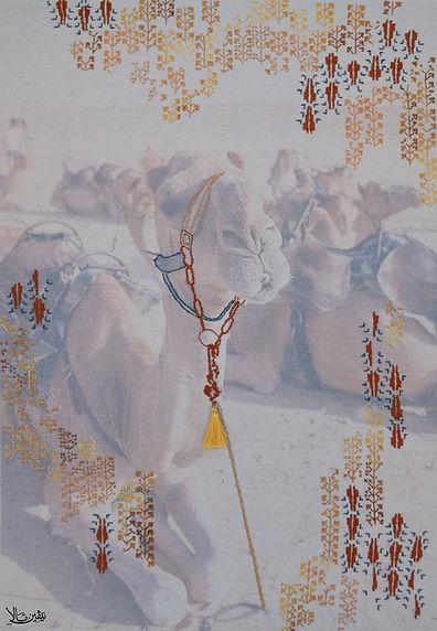 Camel*.jpg