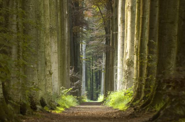 bigstock-Nature-Pathway-651941.jpg
