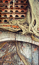 bigstock-Abstract-Background-Tree-Trun-7