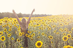 bigstock-Field-Of-Sunflowers-In-Sunligh-