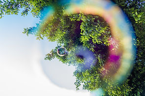 bigstock-Trees-Through-A-Soap-Bubble-In-