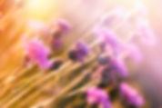 bigstock--164330009.jpg