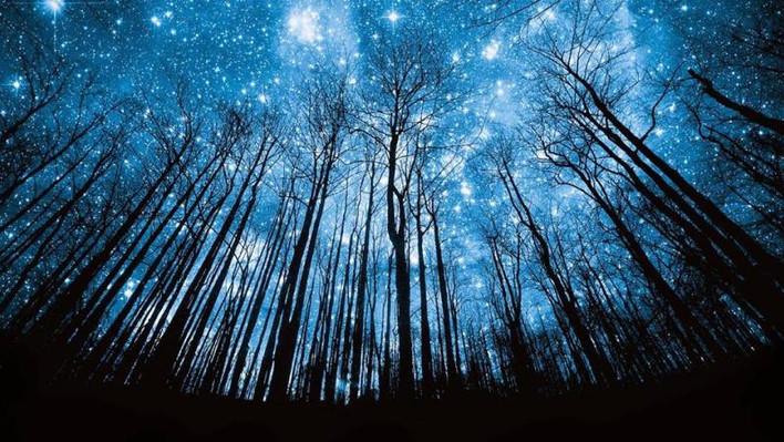 tree night sky.jpg