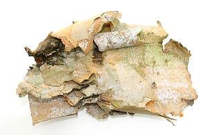 bigstock-Birch-Bark-On-White-8928.jpg