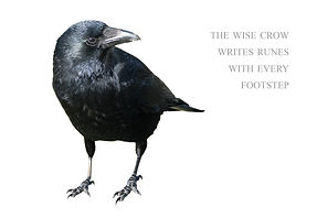 bigstock-Crow-Isolated-On-White-Backgro-