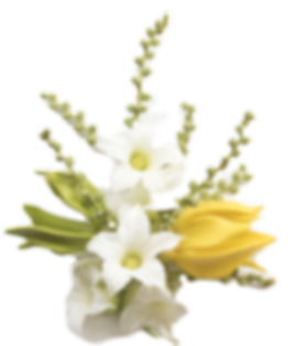 bigstock-Yellow-Flowers-Ylang-Ylang-And-
