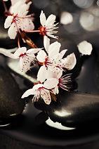 bigstock-Stone-spa--branch-blossoming--4