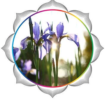 mandala rainbow circles 231.jpg