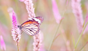 bigstock-Orange-Butterfly-On-Flower-1153
