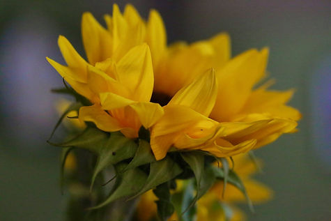 Kepi flower photos8.jpg