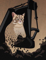 Where Is Our Leopard Cat?