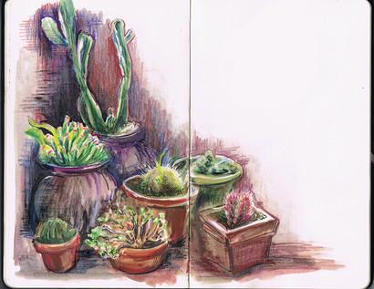 shelter cactus.jpg
