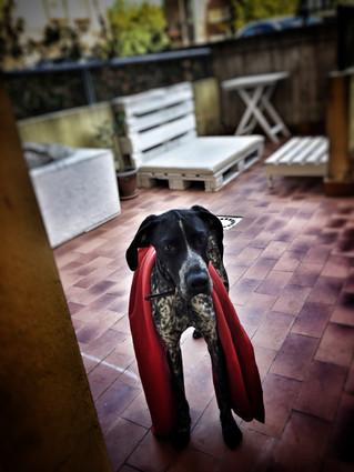 Passeggiando con Dante..