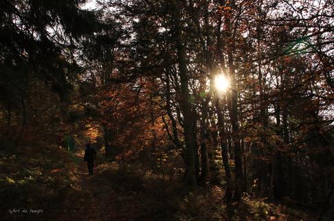 Sur les sentiers des Vosges