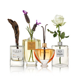 Fragrance Notes