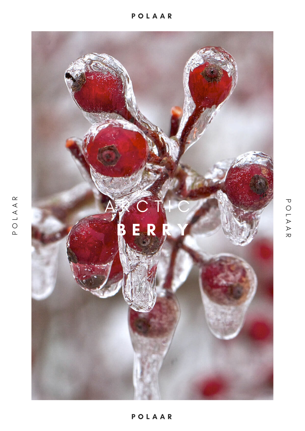 Polaar - Arctic Berry