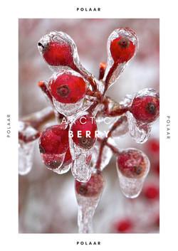 Polaar - Arctic Berry