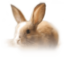 mammalssection-bunny.png