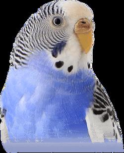 birdssection-bird