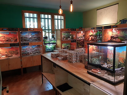 Bassi Garden vendita rettili brescia