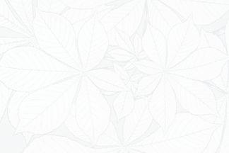 white-flower-textured-background-design.jpg