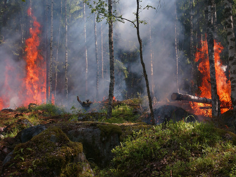 DECODING WILDFIRES AND RECODING STRATEGIES