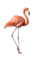 flamingo png resized.png